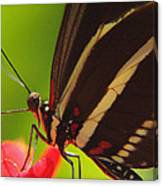 Delicate Touch.. Canvas Print