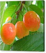 Delicious Plums On The Branch Canvas Print