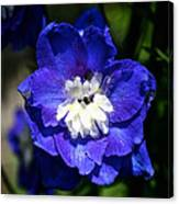 Delphinium Face Canvas Print
