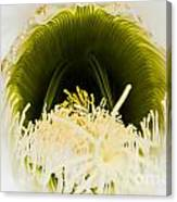 Depths Of The Cactus Flower Canvas Print