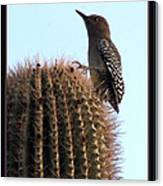 Desert Bird Atop Saguaro Canvas Print