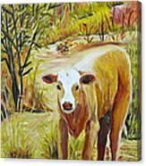 Desert Calf Canvas Print