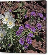 Desert Chicory And Heliotrope Canvas Print