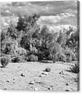 Desert Cloud Bw Palm Springs Canvas Print