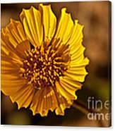Desert Dandelion Canvas Print
