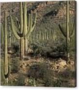 Desert Guardians Canvas Print