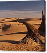 Desert Luxury Canvas Print