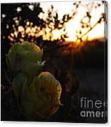 Desert Rose Reflections Canvas Print
