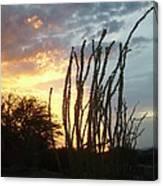 Desert Sunset Ocotillos Canvas Print