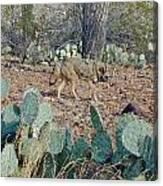 Desert Wolf Canvas Print
