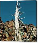Desolation Wilderness Tree 2 Canvas Print