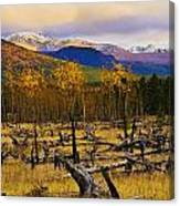 Destruction And Re-growth After Forest Canvas Print