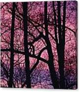 Detail Of Bare Trees Silhouetted Canvas Print