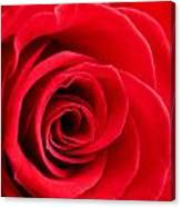 Detail Of Red Rose Canvas Print