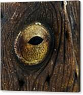 Detail Of The Eye Of A Snake Eel, North Canvas Print