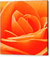 Detailed Close Up Of A Rose Canvas Print