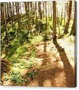 Devonian Park Pathway Canvas Print