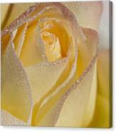 Dew Bejeweled Peace Rose Canvas Print