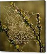 Dew Highlights An Orb-weaver Spiders Canvas Print