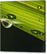 Dew On Leaf, Germany Canvas Print