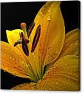 Dew On The Daylily Canvas Print