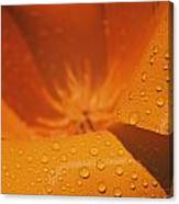Dewdrops On A Flower Canvas Print