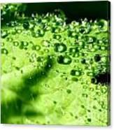 Dewdrops On Leaf Canvas Print