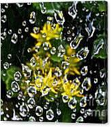 Diamond Studded Web Canvas Print