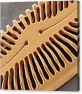 Diatom Frustule, Sem Canvas Print