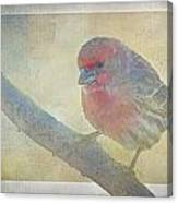 Digitally Painted Finch With Texture II Canvas Print