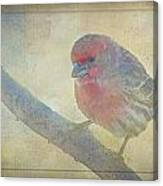Digitally Painted Finch With Texture IIi Canvas Print