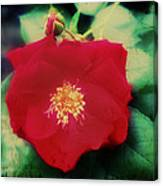 Dirty Rose Knows Canvas Print