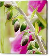Discussing When To Bloom Canvas Print