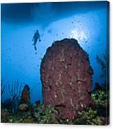 Diver And Barrel Sponge, Belize Canvas Print