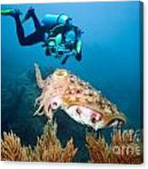 Diver And Cuttlefish Canvas Print