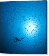 Diver And School Of Fish In Blue Water Canvas Print