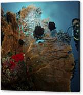 Diver And Sea Fan At Liberty Wreck Canvas Print