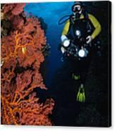 Diver And Sea Fans, Fiji Canvas Print