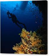 Diver And Soft Coral, Fiji Canvas Print