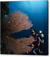 Diver By Sea Fans, Indonesia Canvas Print