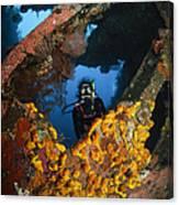 Diver Explores The Liberty Wreck, Bali Canvas Print
