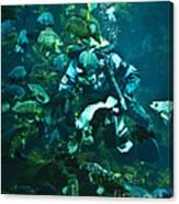 Diver Feeding Fish Canvas Print