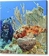 Diver Looks At Scorpionfish Canvas Print