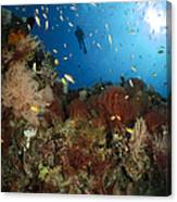 Diver Over Reef Seascape, Indonesia Canvas Print