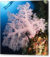 Diver Over Soft Coral Seascape Canvas Print