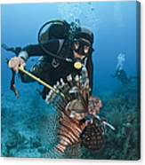 Diver Spears An Invasive Indo-pacific Canvas Print