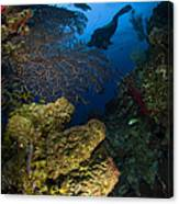 Diver Swims Over A Reef, Belize Canvas Print