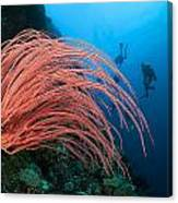 Divers And Whip Coral Canvas Print