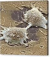 Dividing Cancer Cell, Sem Canvas Print