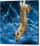 Diving Dog 2 Canvas Print